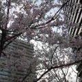 【2018年】都内・電車の見える花見スポット3選!子鉄も大人もみんな嬉しい!(随時更新中!)