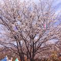 東京で、1歳半の子連れで花見も電車も楽しめる場所を探していたら…【飛鳥山公園】を発見!