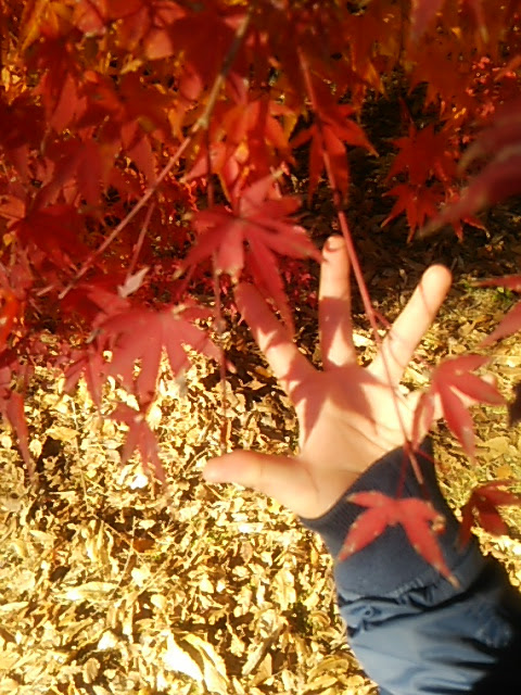 成田山公園の紅葉を、小学校3年生の息子と見てきた。おすすめポイント5つや、アクセスを紹介します!