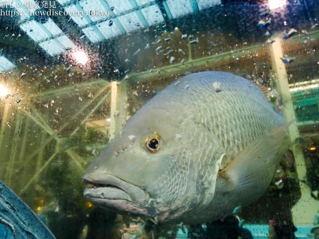 流れるプールの魚たち(笑)